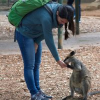 Blue Mountains and Wildlife Private Experience Image